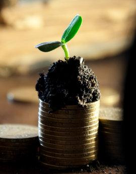 Roślin kiełkująca ze stosu monet